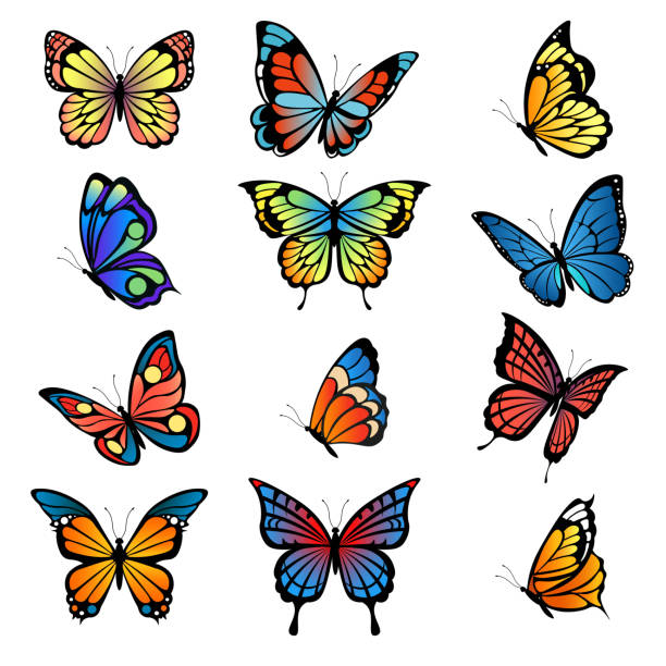 illustrations, cliparts, dessins animés et icônes de papillons colorés. images vectorielles de papillons ensemble - papillon