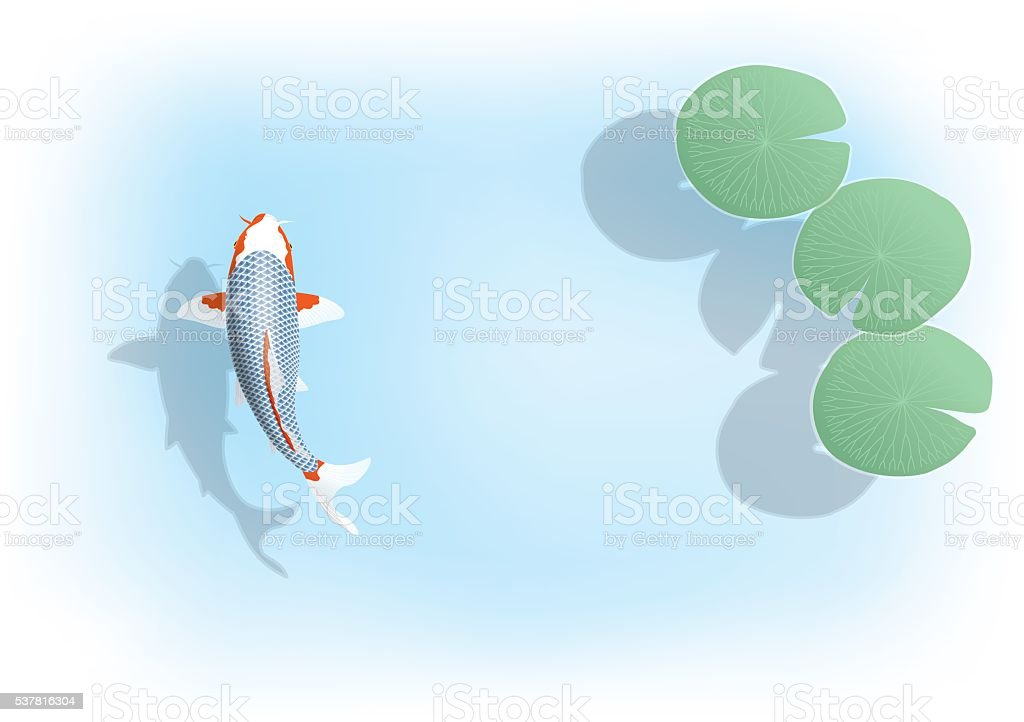 colored carp.Nishikigoi. The leaves of water lily. vector art illustration