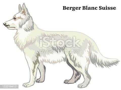 istock Colored decorative standing portrait of Berger Blanc Suisse vector illustration 1222194121
