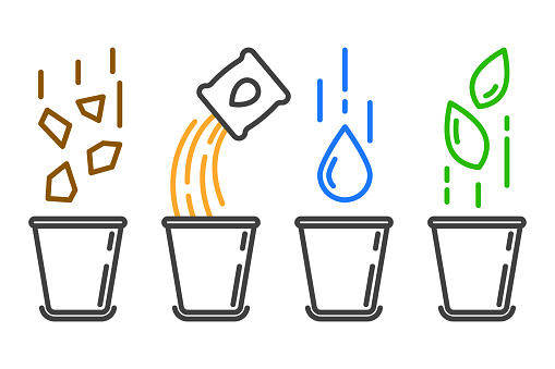 Colored icon of the four stages of planting a plant in a pot. Linear image of a flower pot in which soil and fertilizer are poured, watered and germination sprouts. Isolated vector, white background.