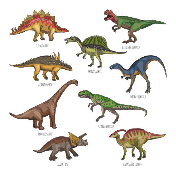 Illustrations colorées de types de dinosaures différents. Tyrannosaurus, rex et stegosaurus - Illustration vectorielle