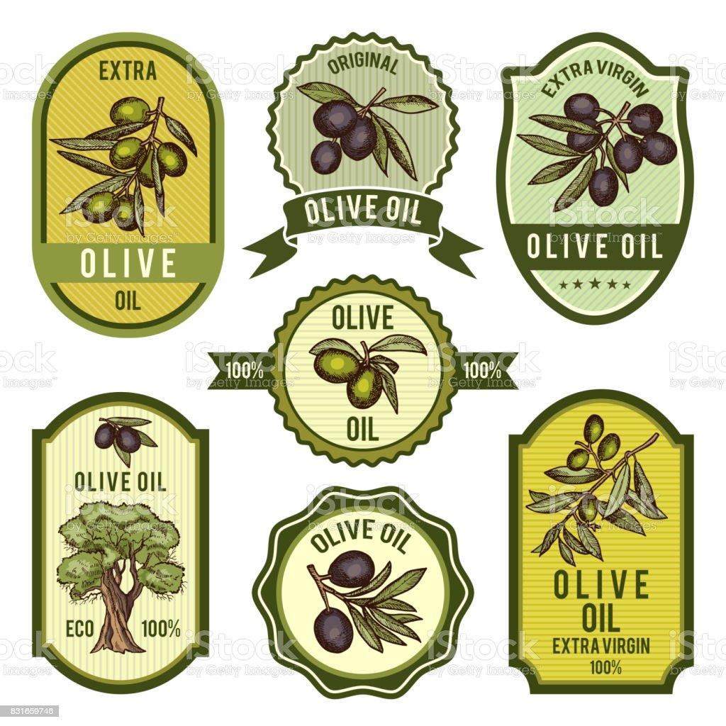 Colored labels for package design. Pictures of olive oil - ilustração de arte vetorial