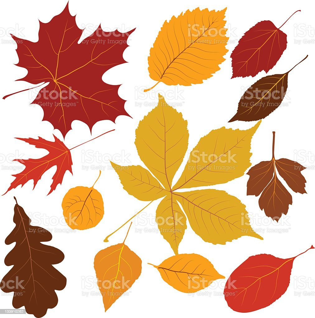 colored leaves royalty-free stock vector art