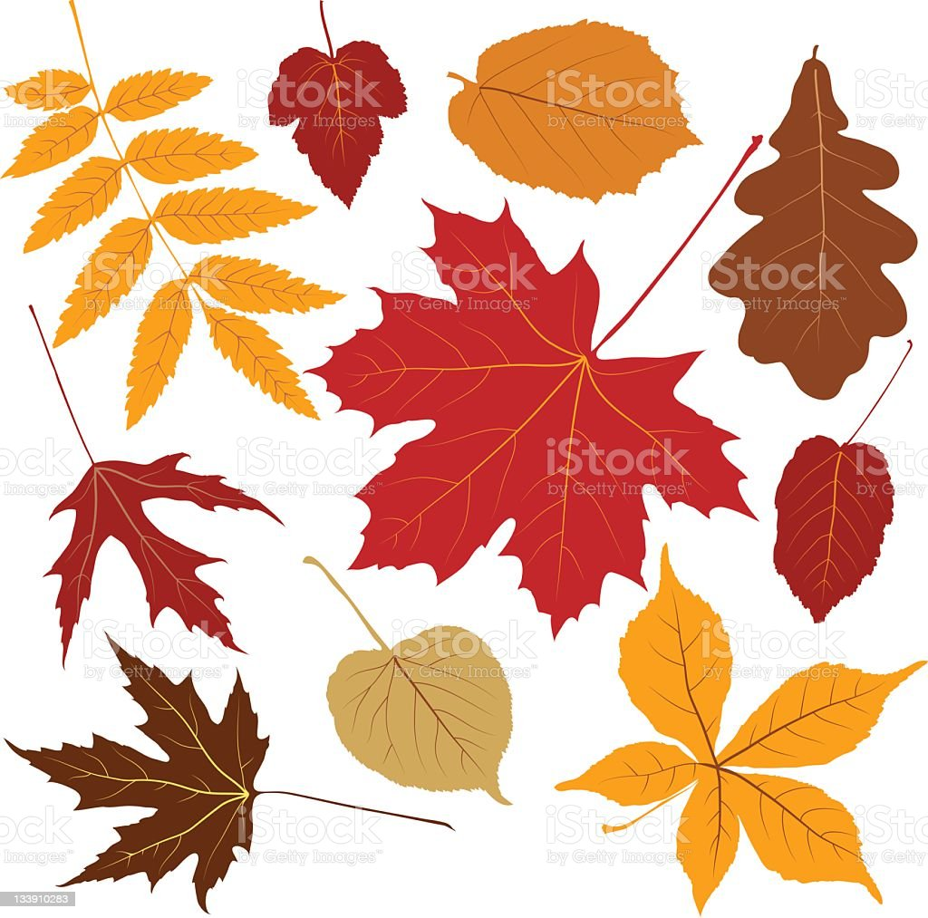 colored leaves vector art illustration
