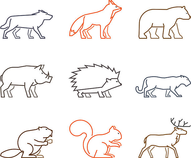Line Drawings Of Rainforest Animals : Royalty free american black bear clip art vector images