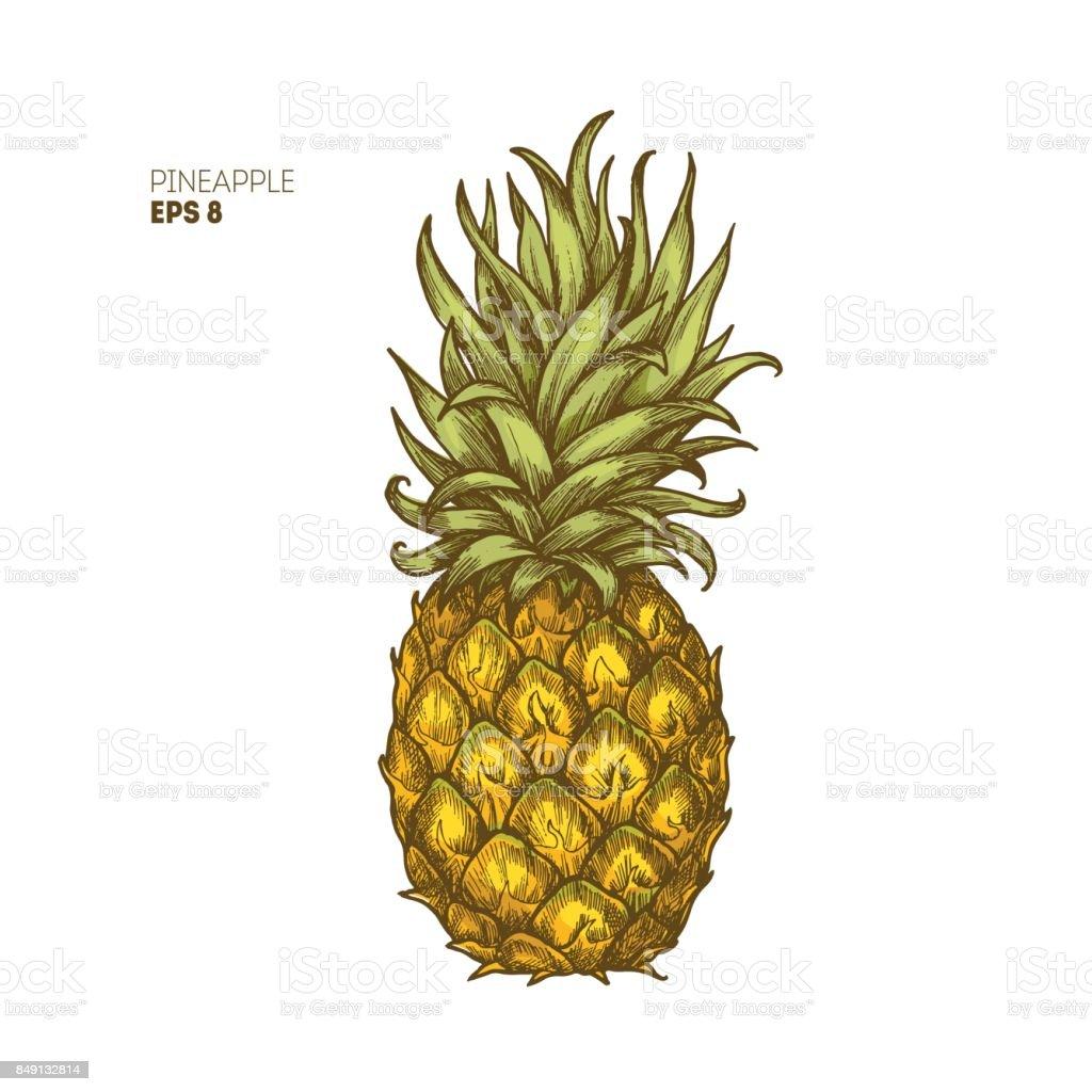 Farbige Ananas Abbildung. Vintage tropische Früchte. Vektor-illustration – Vektorgrafik