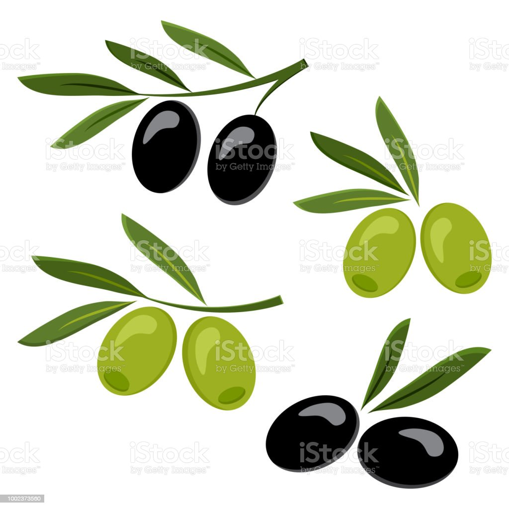 Colored set of black and green olives. Vector illustration