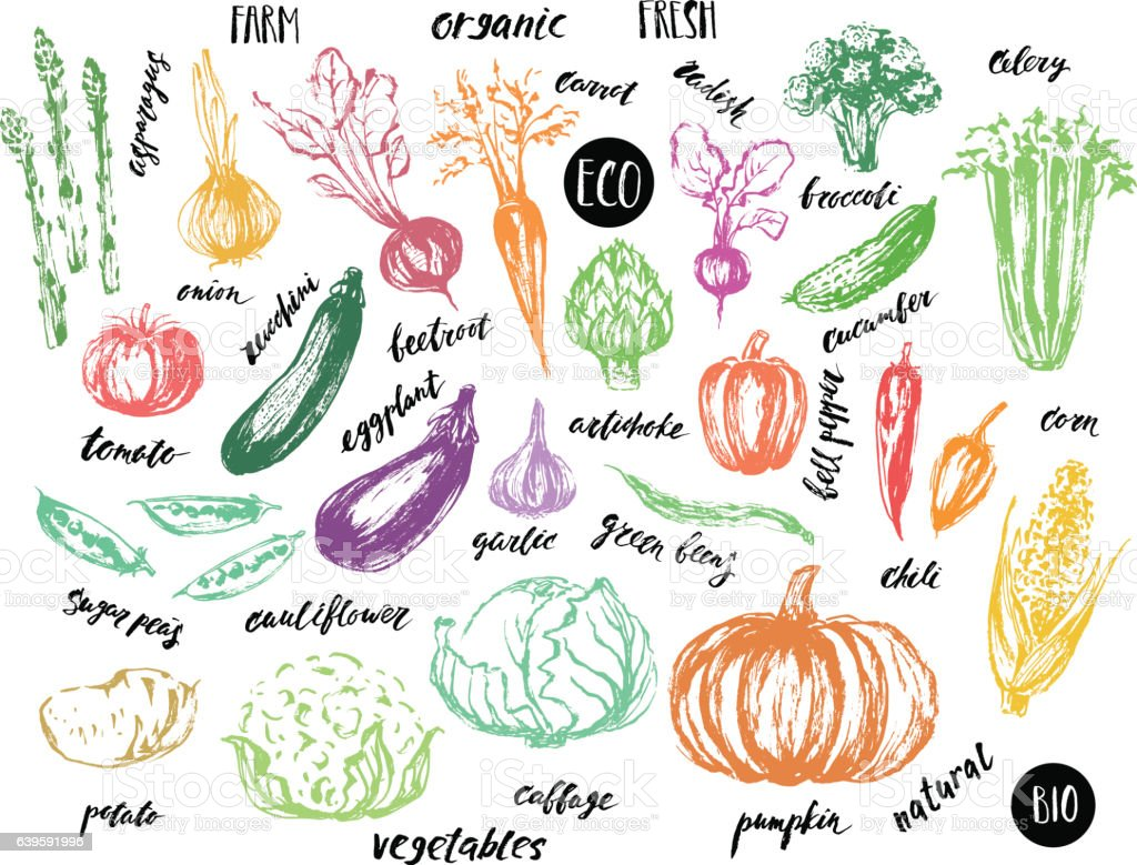 colored sketch of vegetables with hand lettering names stock vector