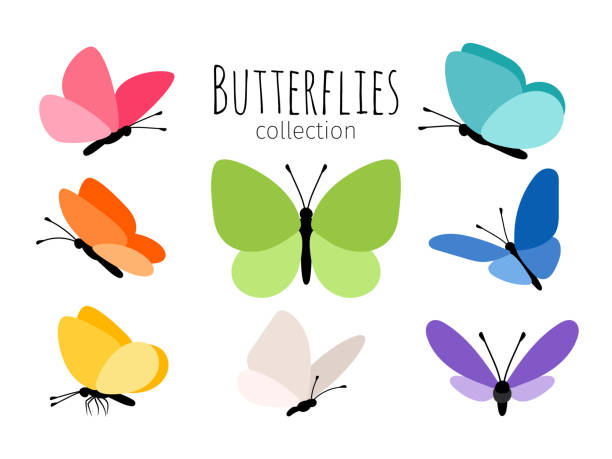 illustrations, cliparts, dessins animés et icônes de papillons de printemps coloré - papillon