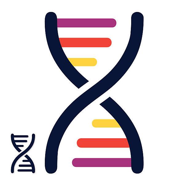 DNA colored strands - VECTOR Vector Illustration of DNA colored strands. High resolution JPEG and Transparent PNG included in file. dna test stock illustrations
