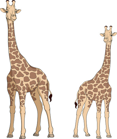 Colored vector illustration of a giraffe. Isolated objects