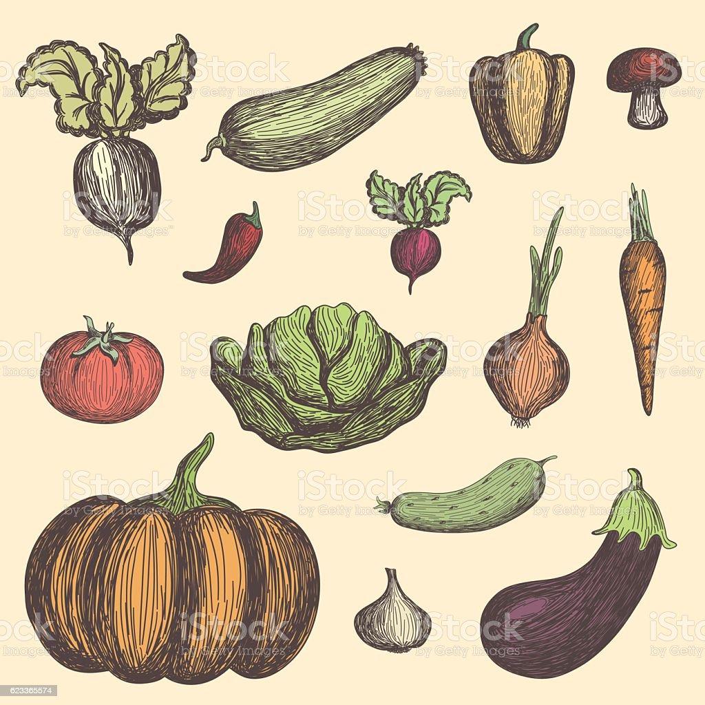 Colored vegetables set vector art illustration