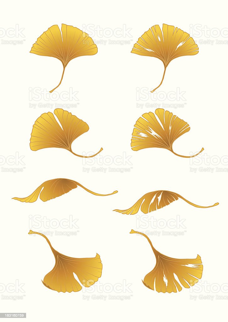 ColoredLeaves_ginkgo royalty-free coloredleavesginkgo stock vector art & more images of autumn