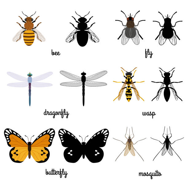 Colorful and black silhouettes flying insects isolated on white background Colorful and black silhouettes flying insects isolated on white background. illustration of insect fly and butterfly fly insect stock illustrations
