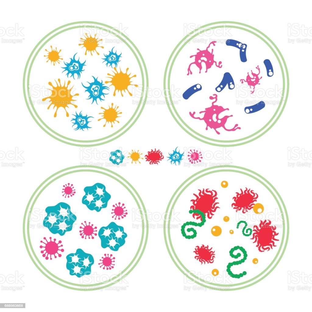 Colorful bacteries in Petri dish vector art illustration