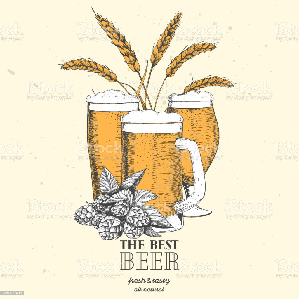 Colorful beer design template. Menu label with barley, hops and beer glasses. Brewery concept. Hand-drawn vector illustration vector art illustration