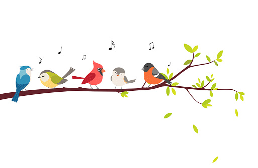 colorful Birds sitting on beautiful trees isolated on white background