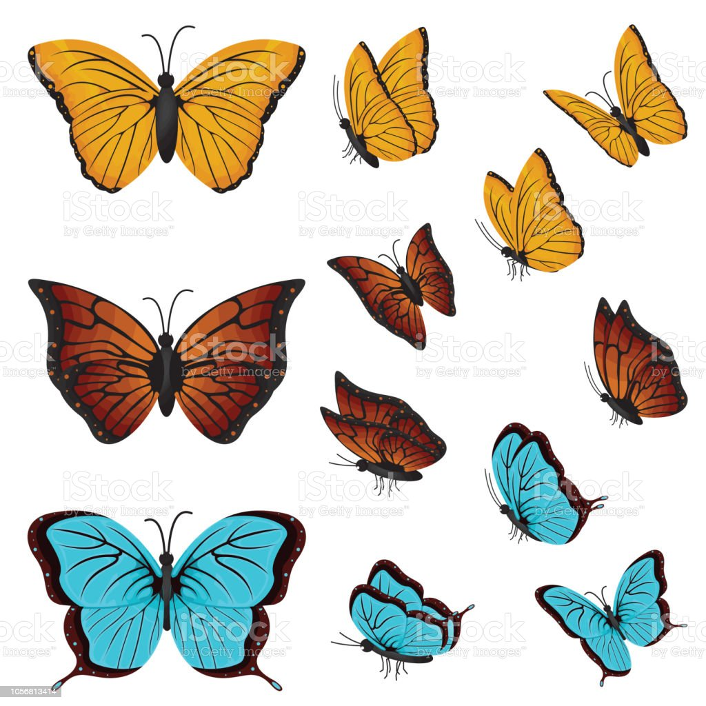 e5c91e69c32d5 Colorful Butterflies Beautiful Butterfly Various Directions Collection Set  - Illustration .