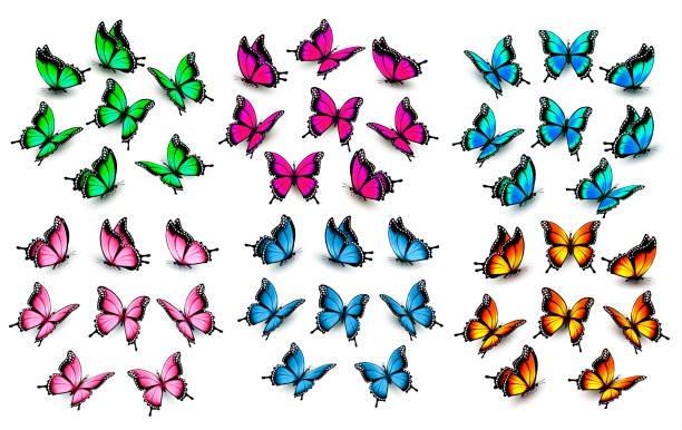 illustrations, cliparts, dessins animés et icônes de ensemble de papillons colorés. vector. - papillon