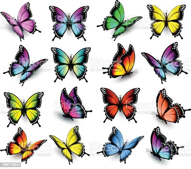 Colorful butterflies set vector vector id696778644?b=1&k=6&m=696778644&s=612x612&h=khqkks53l5jzgphafbbppkfeiqvo3lygnccvvbupelk=