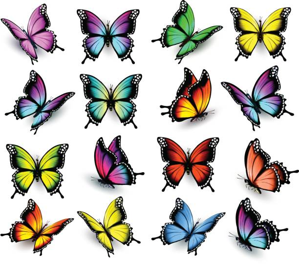 colorful butterflies set. vector. - butterfly stock illustrations