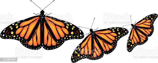 Colorful butterflies vector id121391041?b=1&k=6&m=121391041&s=612x612&h=howoznlrqs0qalzbvhcg8efnjrx1zlcg9itgep nnhm=