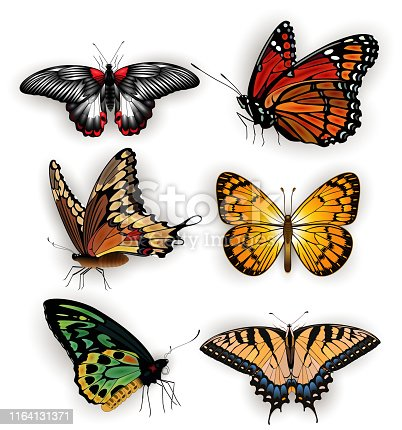 Illustration of swallowtail, silverspot, monarch, fritillary, morpho butterflies isolated