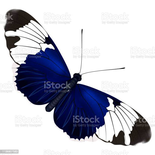 Colorful butterfly isolated on white vector id1156807583?b=1&k=6&m=1156807583&s=612x612&h=32hhxhthhnvtmfnjwdimauf0wymglivlnvwc4k 4fow=