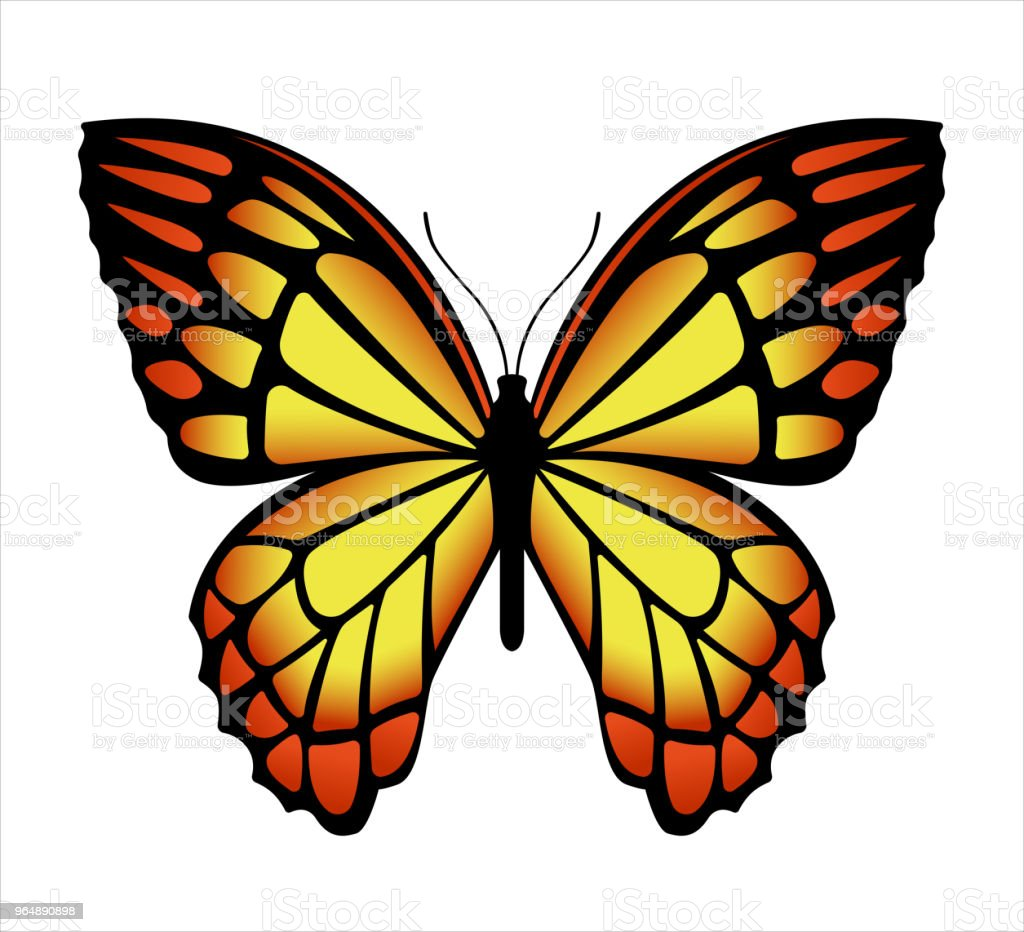 Colorful butterfly . Vector illustration royalty-free colorful butterfly vector illustration stock illustration - download image now