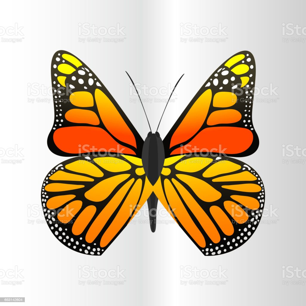 colorful butterfly with abstract decorative pattern summer free