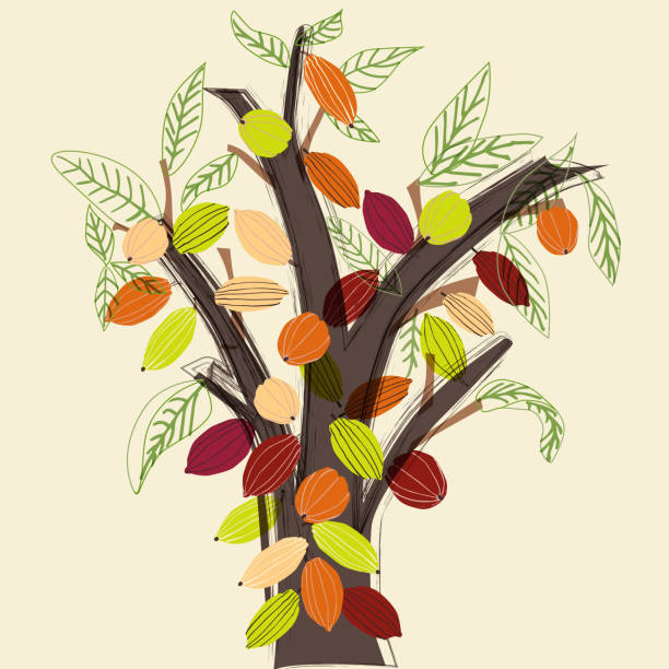 338 Cocoa Tree Illustrations Clip Art Istock