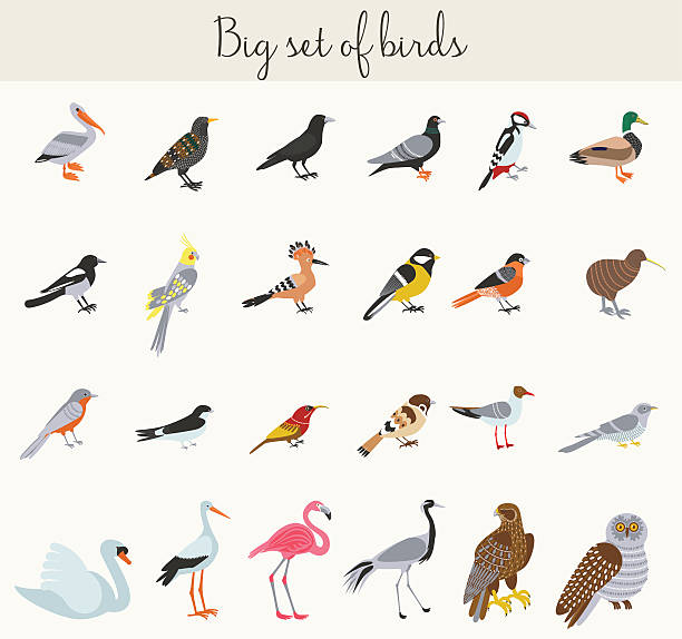 colorful cartoon birds illustration icons - bird watching stock illustrations, clip art, cartoons, & icons
