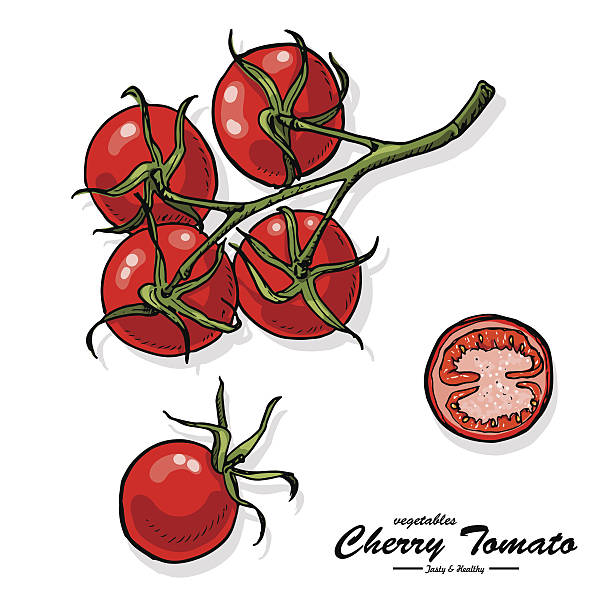 colorful cherry tomato in sketch style - cherry tomato stock illustrations