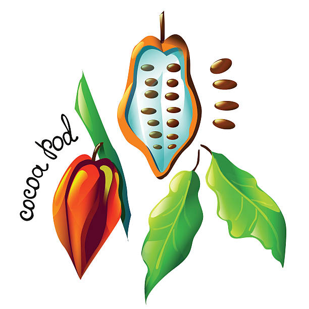 colorful cocoa pod - paleo diet stock illustrations, clip art, cartoons, & icons