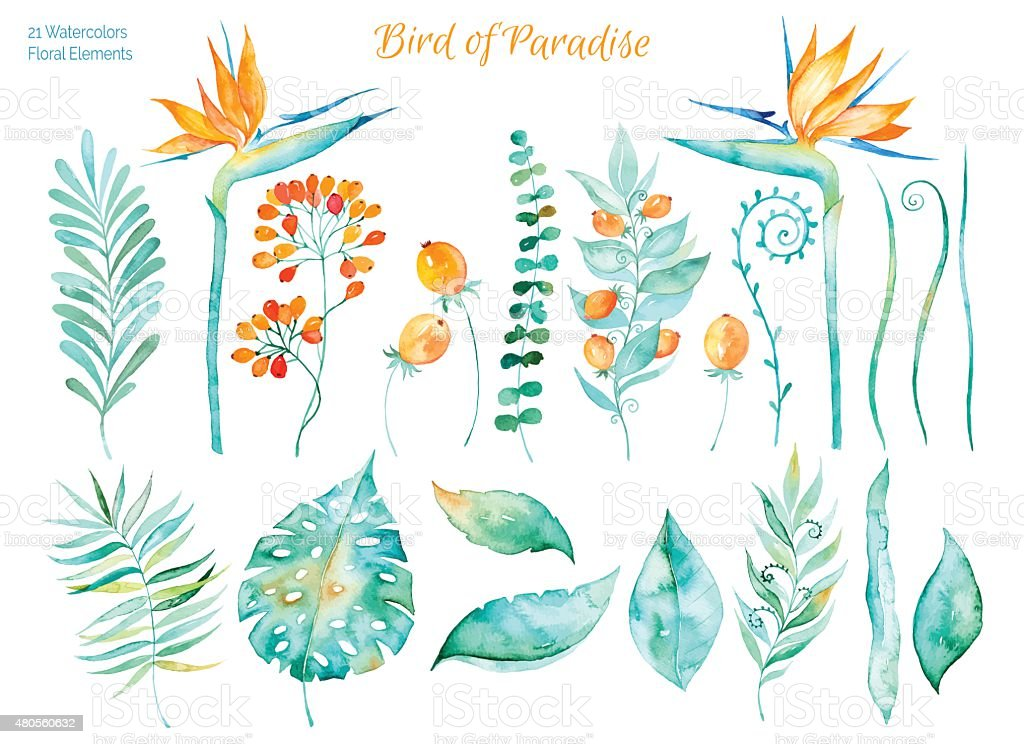 Colorful collection with tropical leaves and flowers of Paradise vector art illustration