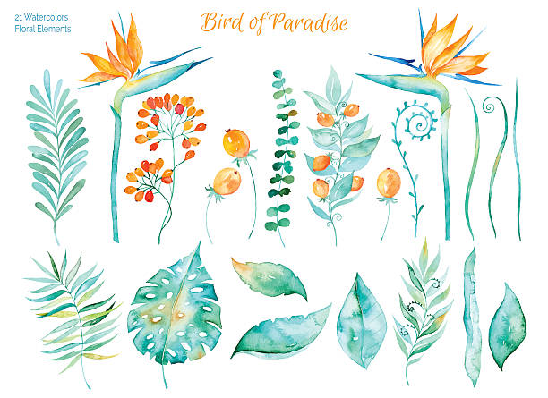 Colorful collection with tropical leaves and flowers of Paradise Vector floral set.Colorful collection with tropical leaves and flowers of Paradise, watercolor drawing. Tropical leaves set. Set of floral elements for your compositions. bird of paradise plant stock illustrations