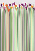 An original artwork vector illustration of a bunch of Crocus flowers in various nuances of violet and orange with long stems in different nuances of purple, orange, red, yellow and green, all on a grey background. Vertical image which can be used as a pattern, postcard, wrapping paper or wallpaper.