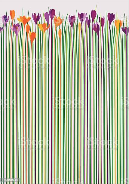 Colorful crocuses as pattern vector id165808032?b=1&k=6&m=165808032&s=612x612&h=mrosodzodzgk1krtnv2klk7xwnfbicpikodipgjvkuc=