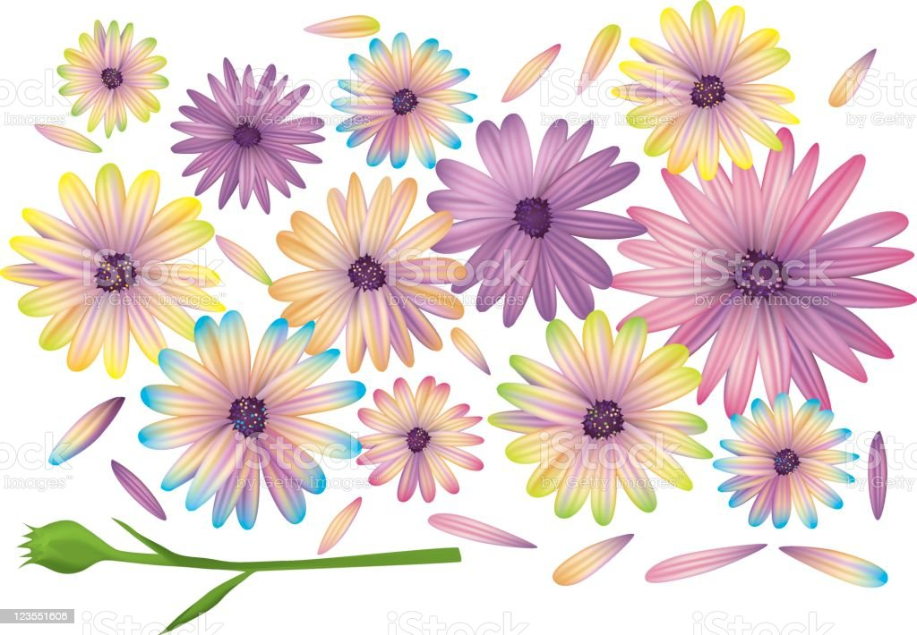 Colorful Daisies vector art illustration