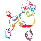 Colorful decorative standing portrait of Poodle vector illustration