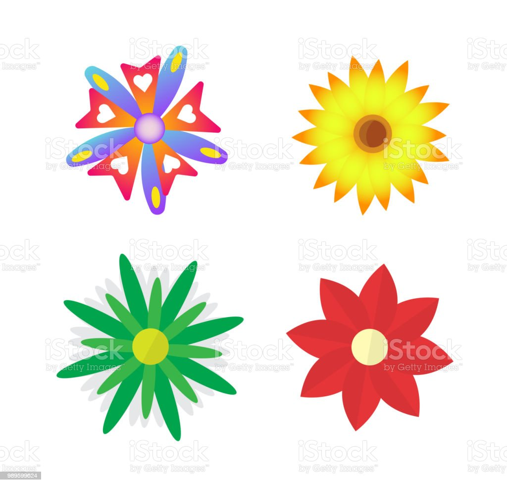 Colorful Different Flowers On White Background Vector Illustration