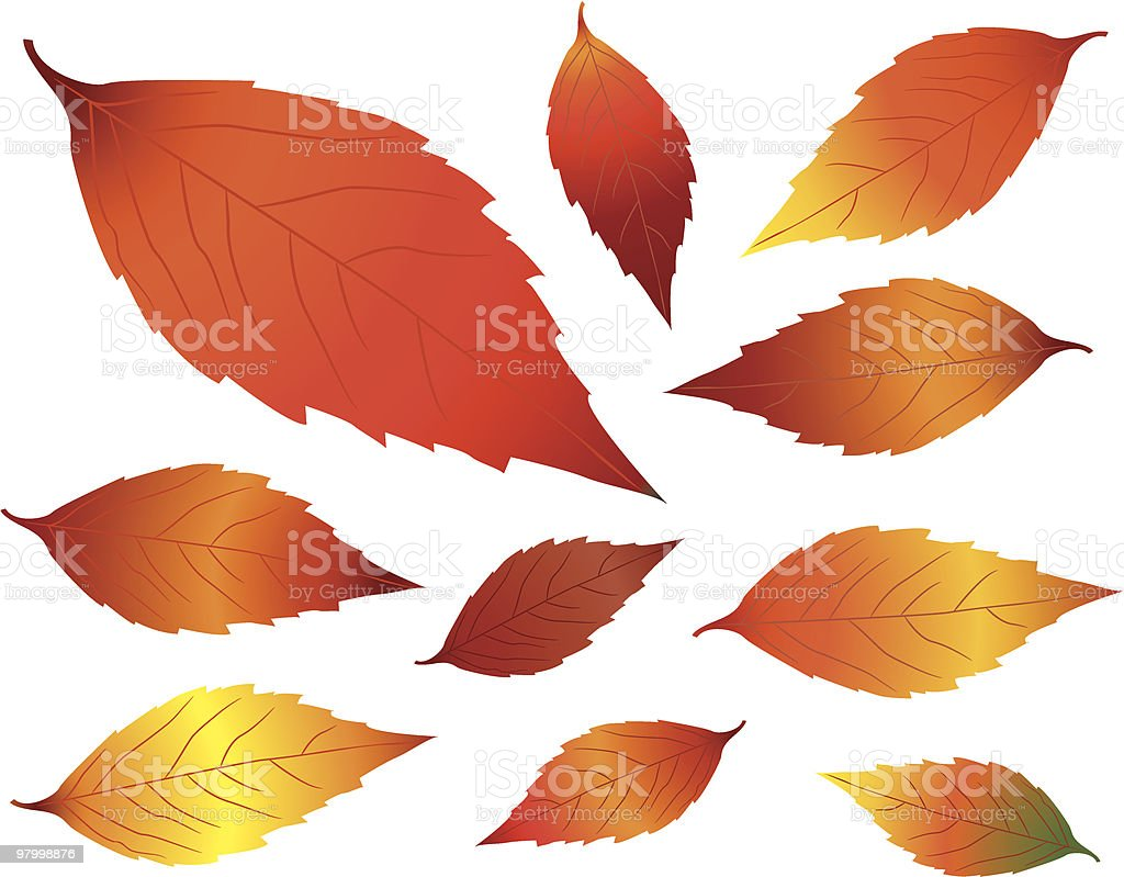 Colorful fall leaves royalty-free colorful fall leaves stock vector art & more images of autumn