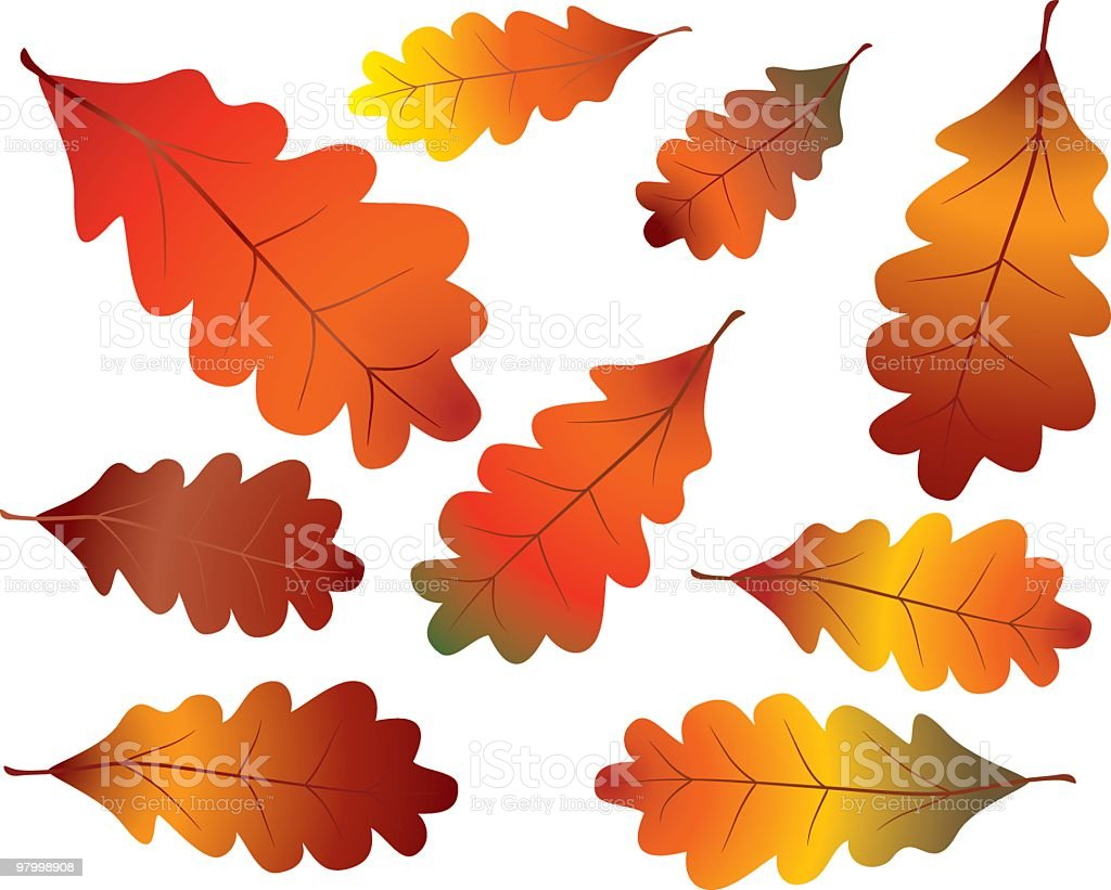 Colorful fall oak leaves royalty-free colorful fall oak leaves stock vector art & more images of autumn