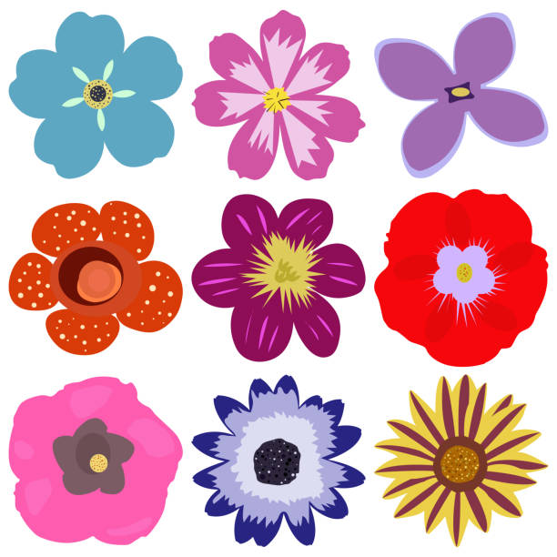 Colorful flower vector set vector art illustration