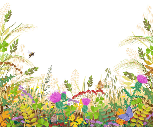 Colorful Frame with Autumn Meadow Plants and Insects Horizontal border with autumn meadow plants and insects. Floral frame with fading grass, colorful wild flowers, bumblebees and butterflies on white background, space for text. Vector flat illustration bee borders stock illustrations