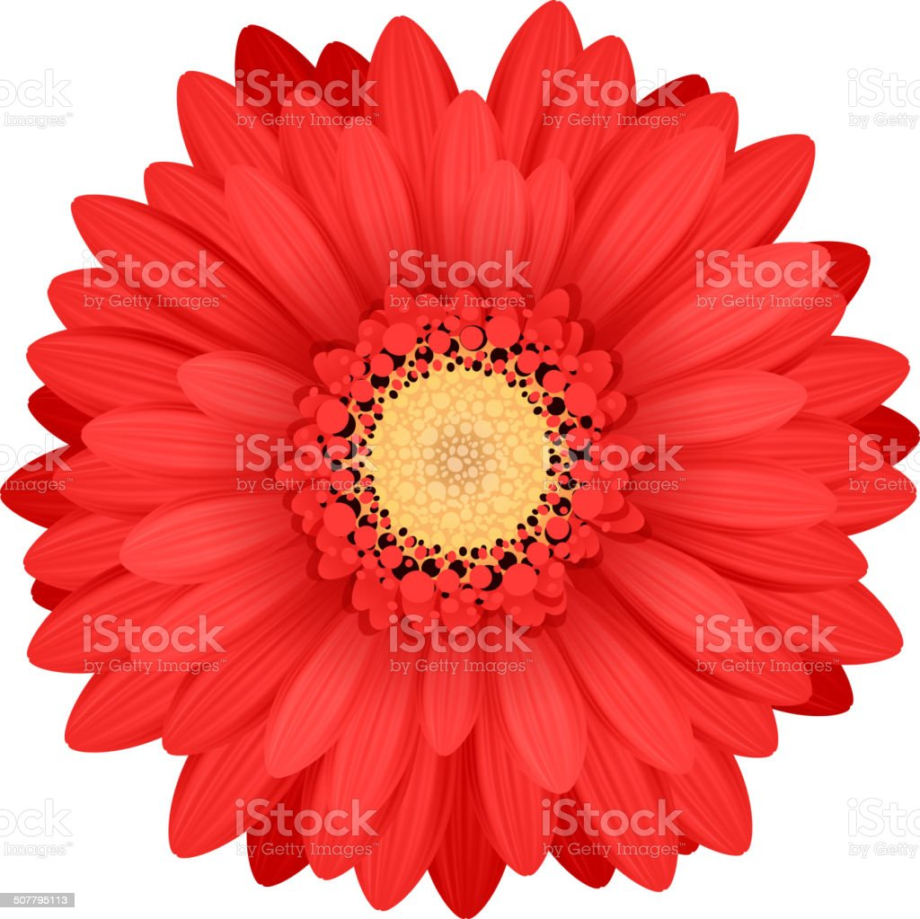 royalty free gerbera daisy daisy single flower petal clip art rh istockphoto com gerber daisy border clip art gerber daisy clip art free