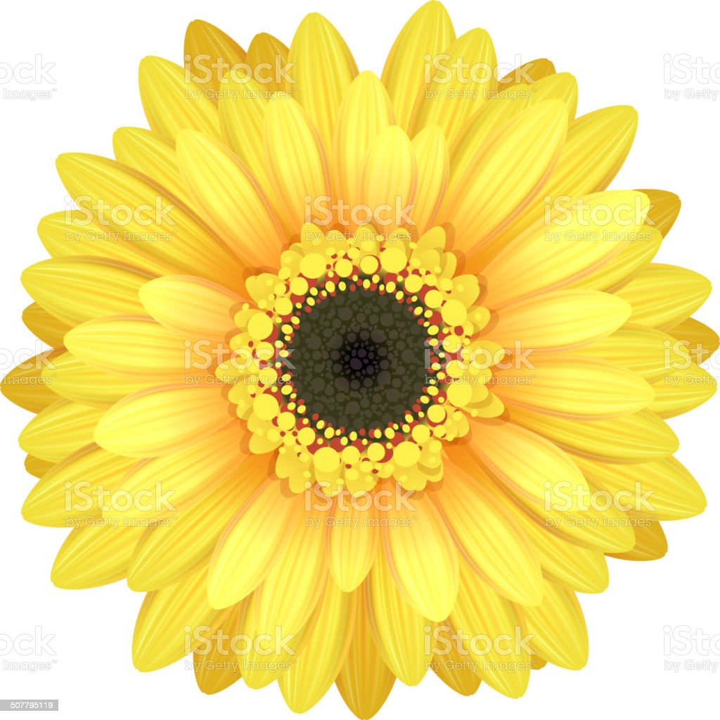 Colorful Gerbera Flower Head Yellow And Black Colors Stock Vector