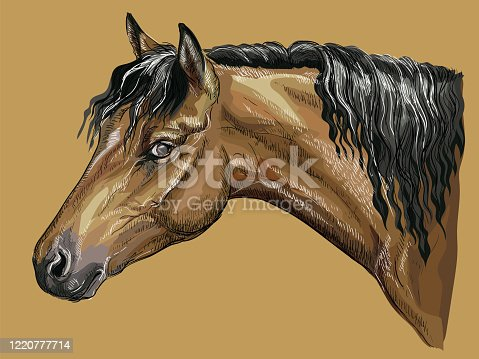 Colorful hand drawing portrait of bay Welsh Pony. Horse head with long mane in profile isolated vector hand drawing illustration on beige background