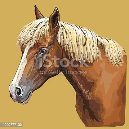 Colorful hand drawing portrait of horse. Horse head  in profile isolated vector hand drawing illustration on yellow background