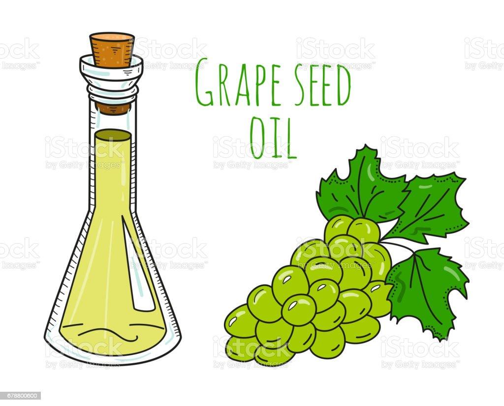 Colorful hand drawn grape seed oil bottle vector art illustration